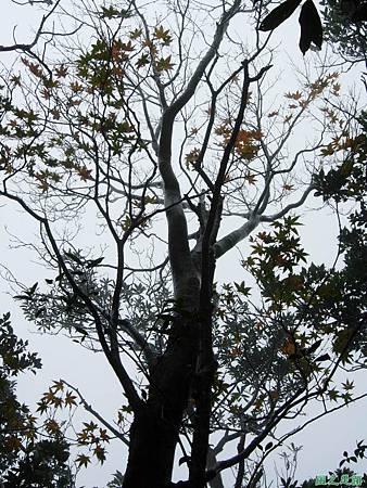 樂佩山20061028(12)