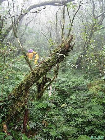 樂佩山20061028(27)
