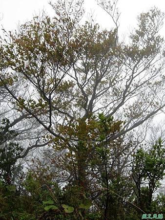 樂佩山20061028(36)