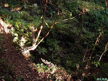 樂佩山20061028(48)