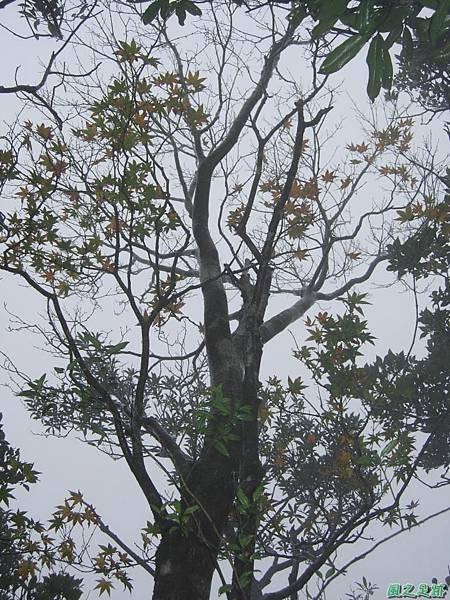 樂佩山20061028(59)