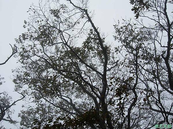 樂佩山20061028(89)