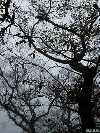 樂佩山20061028(104)