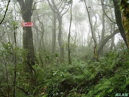 樂佩山20061028(109)