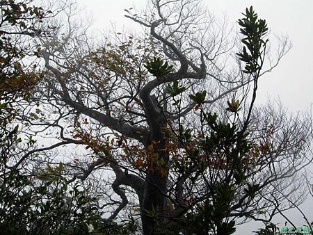 樂佩山20061028(121)