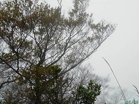 樂佩山20061028(164)