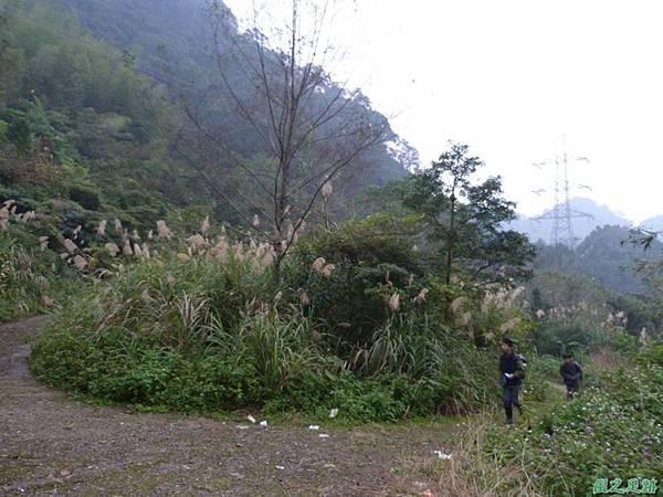 銹毛鐵線蓮20140104(23)