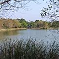 八德埤塘生態公園(27)