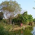 八德埤塘生態公園(33)