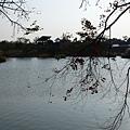 八德埤塘生態公園(36)
