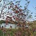 八德埤塘生態公園(38)
