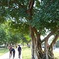 八德埤塘生態公園(56)