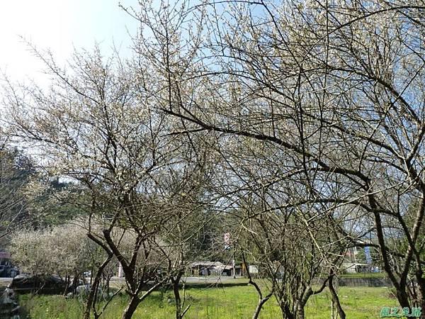 上坪梅園20140111(17)