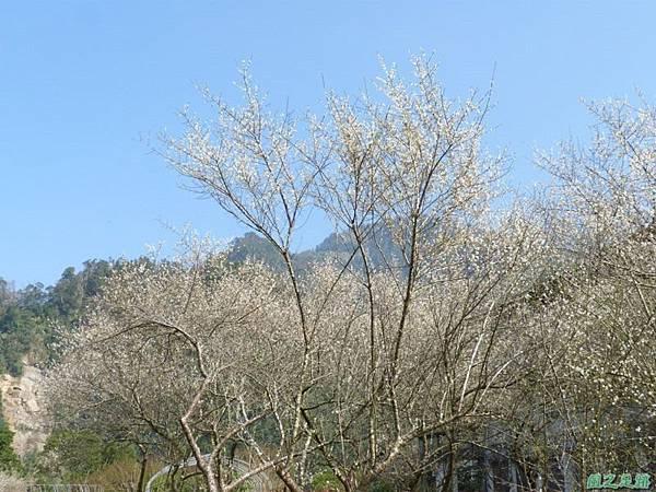 上坪梅園20140111(30)