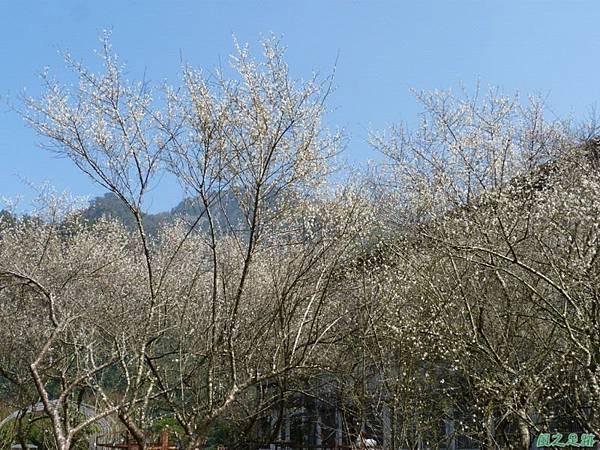 上坪梅園20140111(31)
