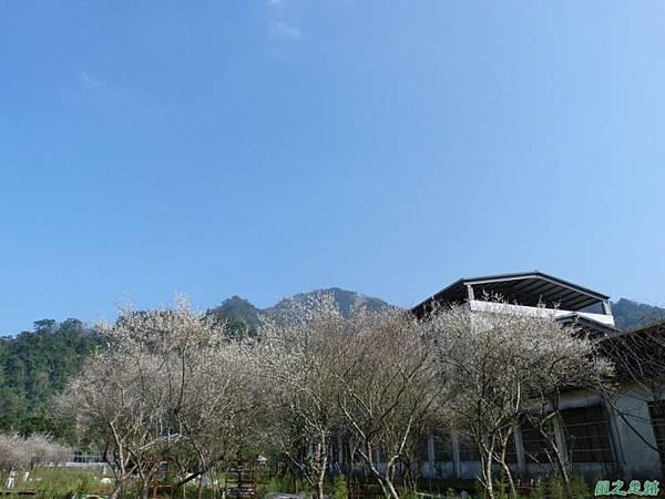 上坪梅園20140111(33)