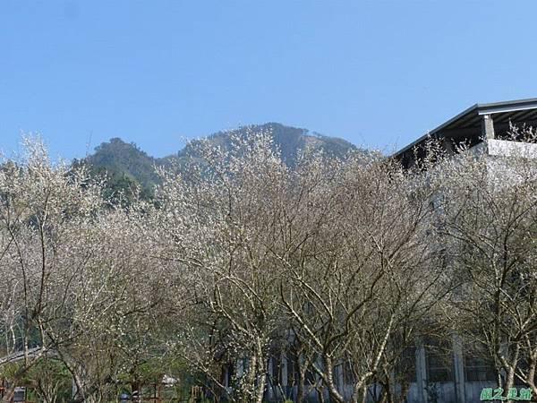 上坪梅園20140111(34)