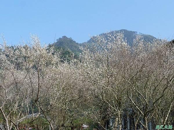 上坪梅園20140111(35)