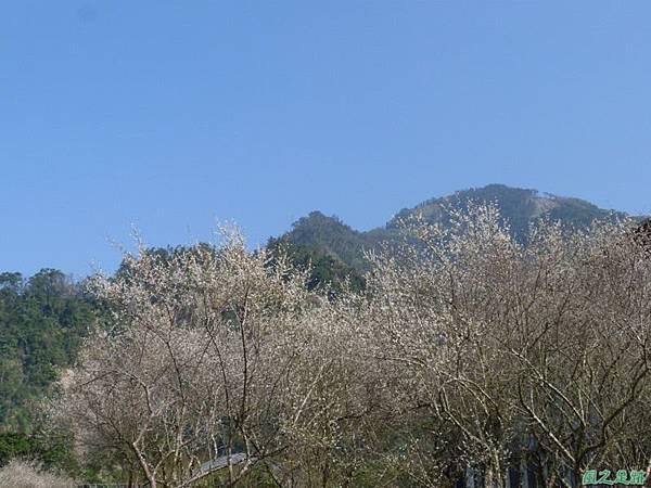 上坪梅園20140111(36)