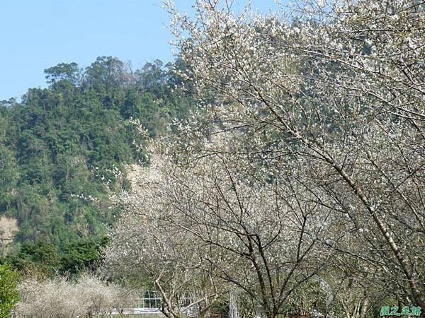 上坪梅園20140111(44)