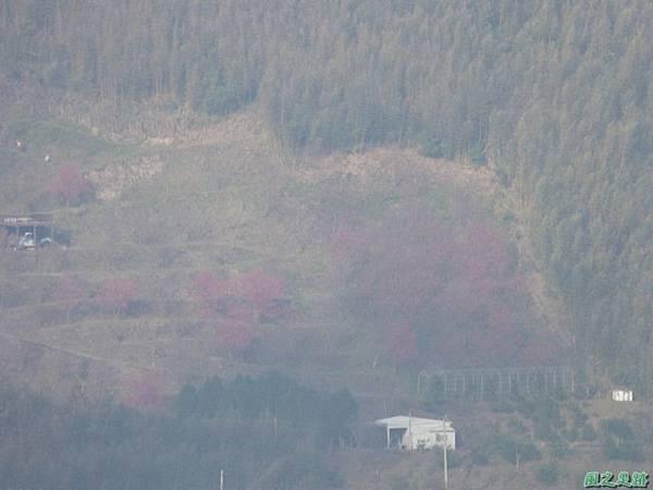 野馬敢山20140111(41)