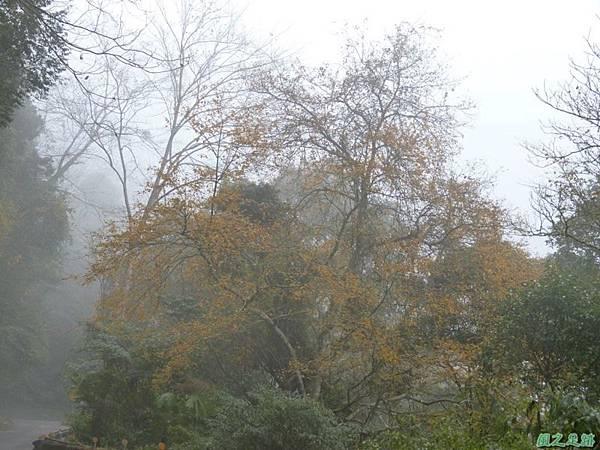 野馬敢山20140111(49)