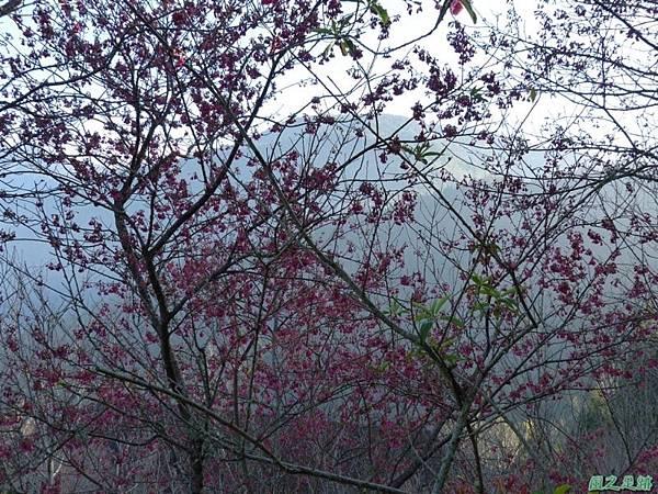 野馬敢山20140111(61)