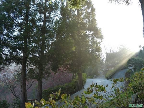 野馬敢山20140111(82)