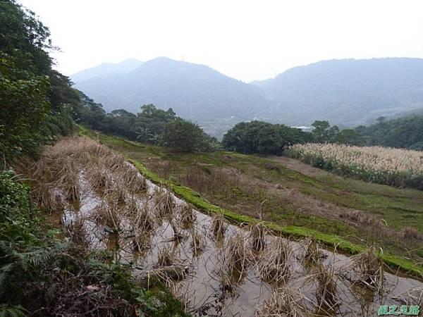 赤山2014018(47)