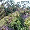 缺子坑山20140105(9)