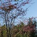 光崙山20140124(30)