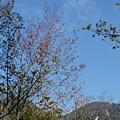 光崙山20140124(31)