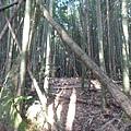 光崙山20140124(53)
