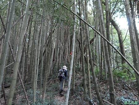 光崙山20140124(72)
