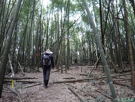 光崙山20140124(77)
