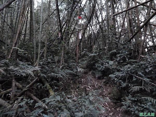 光崙山20140124(116)