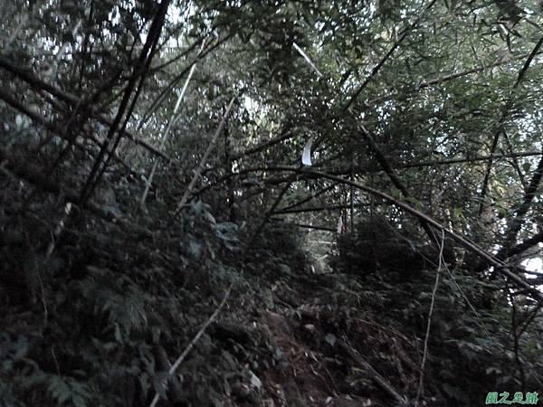 光崙山20140124(118)
