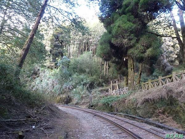 水山巨木20140125(1)