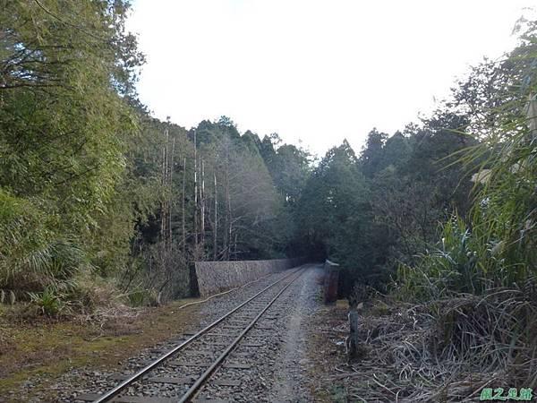 水山巨木20140125(3)