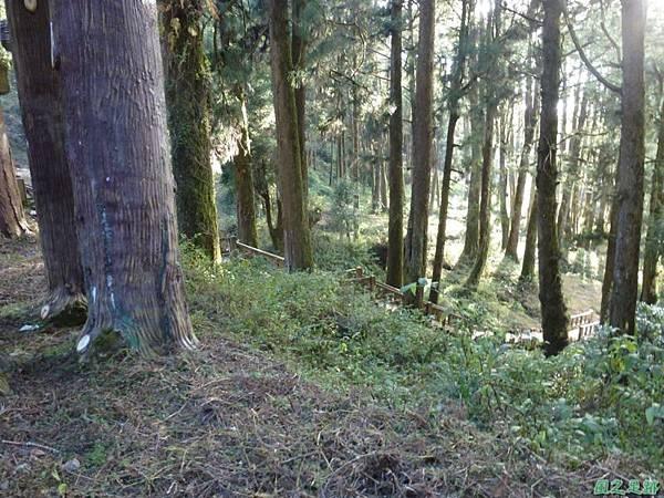 水山巨木20140125(6)