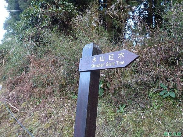 水山巨木20140125(46)