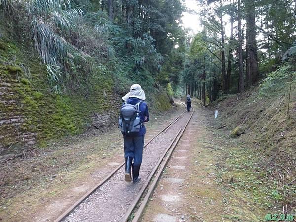 水山巨木20140125(50)