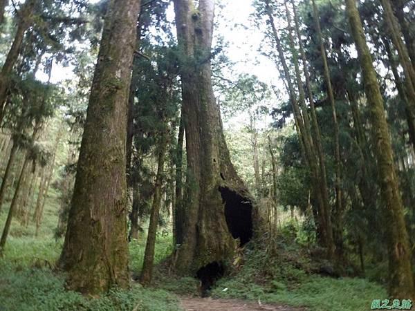 水山巨木20140125(57)