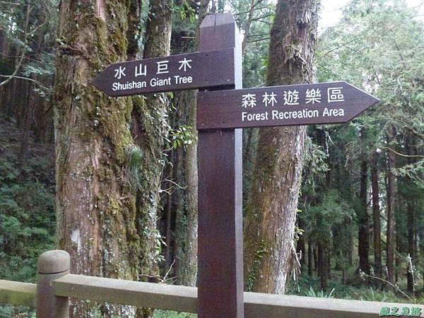水山巨木20140125(60)