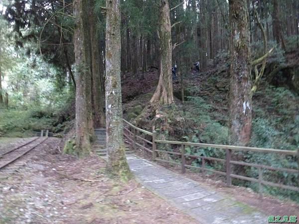 水山巨木20140125(62)