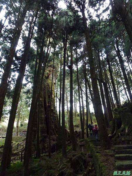 水山巨木20140125(63)