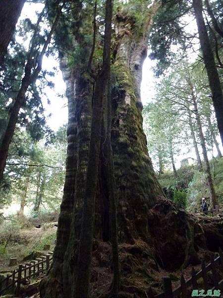 水山巨木20140125(64)