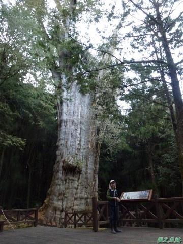 水山巨木20140125(67)