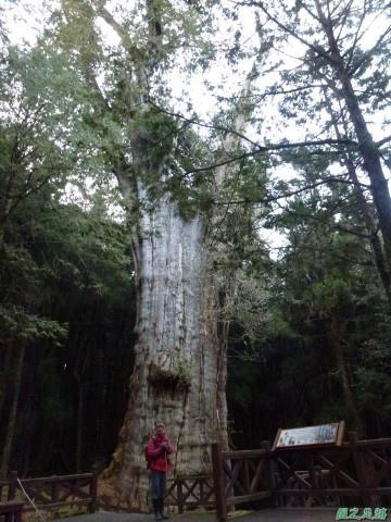 水山巨木20140125(69)