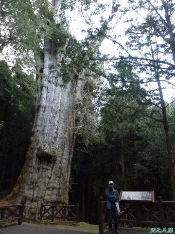 水山巨木20140125(70)